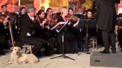 オーケストラに犬が...コンサートマスターの隣で音楽を聴きだした【動画】