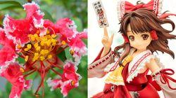 「霊夢」中国で花の品種に。東方Projectの人気キャラから命名