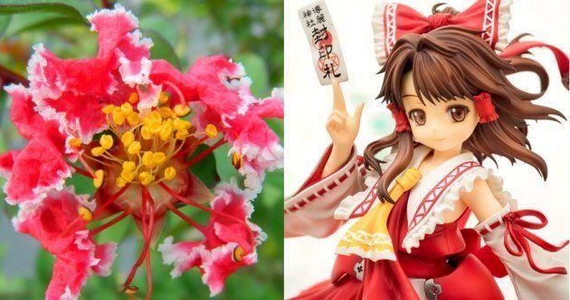 サルスベリの新品種「灵梦」(左)と、博麗霊夢のフィギュア