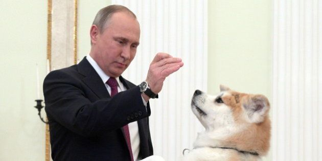 MOSCOW, RUSSIA - DECEMBER 13, 2016: Russia's President Vladimir Putin with his Akita dog named Yume before...