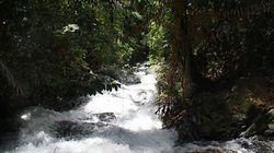 トラが棲む森を守りながら電力を供給!スマトラ島で小水力発電機を設置