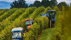 【IoT】スマホで農業 生育・環境関連データ監視が可能に