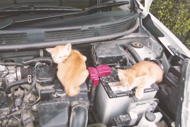 日産が呼びかけ「猫バンバンプロジェクト」って?