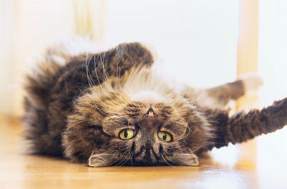 猫はちっともよそよそしい生き物なんかじゃない 「5つの迷信」を解く