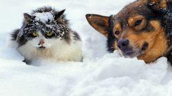 北海道・稚内で初雪観測、観測史上2番目の早さ 1番早かった1978年に流行っていた曲はアレ
