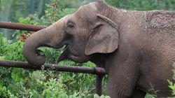 やっと自由に生きられる。40年間サーカスにいた象は、南米初の保護区で引退後の生活を楽しむ