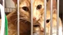 子猫の姉妹、シェルターの檻でぴったり身を寄せ合う(動画)