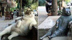 「ずっと街を見守ってやるニャン」トルコの名物猫は、亡くなった後も同じポーズで佇む