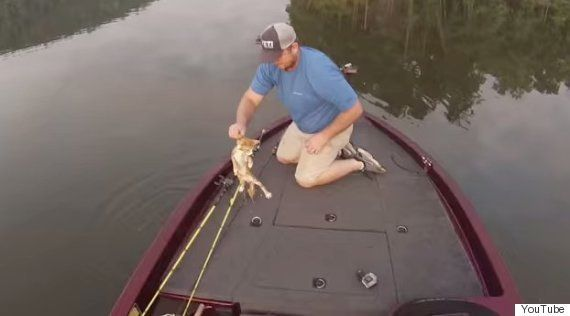 子猫が川を泳いできて......ひょいっとボートに乗せました(動画)