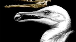 祖先的鳥類の頭蓋が明らかに