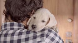 YouTube2014年の人気動画ランキング 猫VS犬の結末は...?(調査結果)