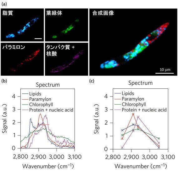 細胞の個性を探るイメージング装置開発 --