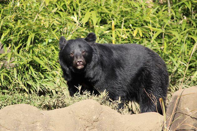 今年は4年に1度の出没多発年? クマに襲われたときはどうしたらいいのか