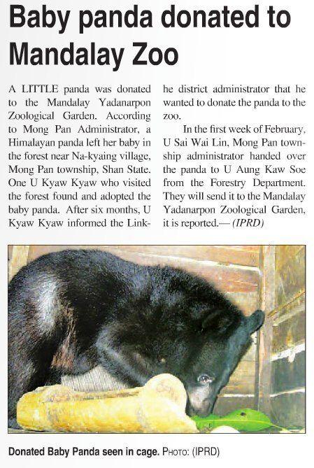 「レッサーパンダの赤ちゃんを保護したよ」。ミャンマー国営紙の写真が、完全に別の生き物