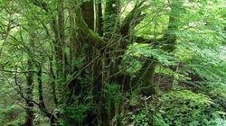 京都丹波高原の新国定公園指定 問われる今後のマネジメント