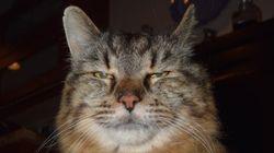 ギネスが認定した世界最高齢のネコは、2回目の王座だった。なぜ?