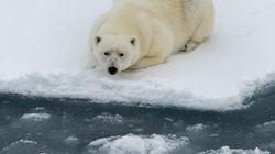こんなに海氷が減ったのか 北極の形が15年で驚くほど変わった(気候変動)