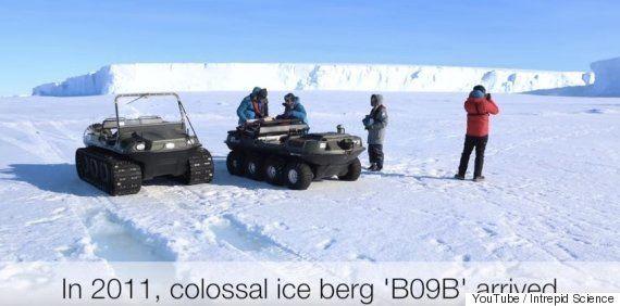 ペンギン15万羽、南極大陸で一斉に死亡との研究結果 何があった?