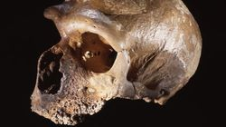 ネアンデルタール人が絶滅した理由。病気でも気候変動でもなく......(研究結果)