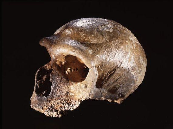 ネアンデルタール人が絶滅した理由。病気でも気候変動でもなく...(研究結果)