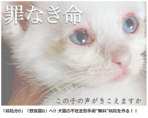 留守宅から49匹のネコ。命を救いたい!無料で不妊手術をする病院を