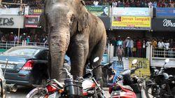 「大暴れしちゃったゾウ!」インドで建物など100カ所を破壊(画像集)