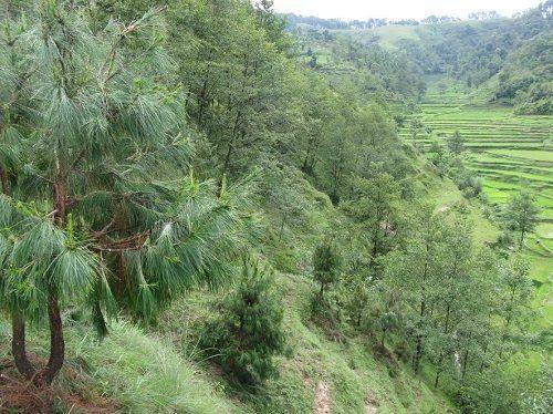 地震直後も訪問、ネパールでの植林活動/自由学園が四半世紀にわたる交流
