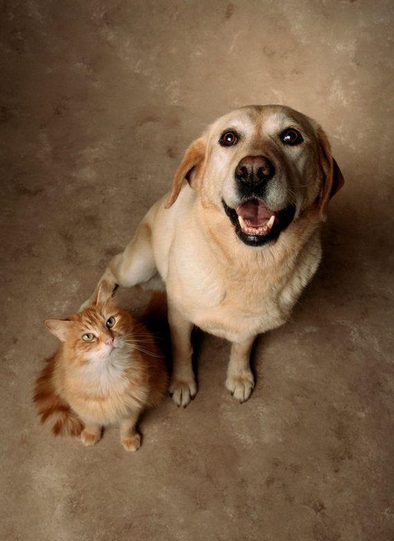 「猫と犬、どっちが飼い主を愛している?」科学的に調べたら......(研究結果)