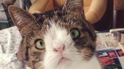 生まれつき鼻が潰れた猫 それでも「見た目が変わっていても素晴らしい存在になれる」