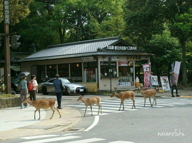奈良にもアビイ・ロードがあったとは。鹿のビートルズが出現