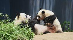 なにこれ尊すぎる…上野動物園で「シャンシャン」の母になりきる神企画