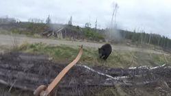 クマが超スピードで襲いかかってきた。恐怖の瞬間をカメラが捉えた(動画)