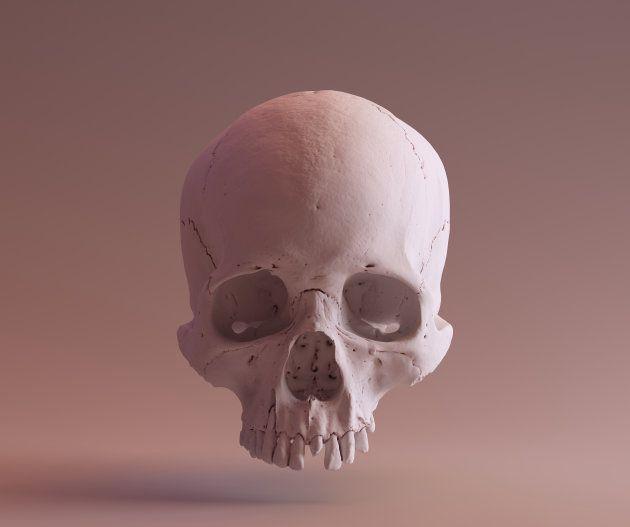 頭蓋骨のイメージ画像 = SCSU VizLab - thingiverse.com/scsuvizlab/about - (CC