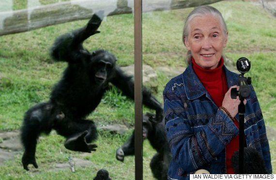 「トランプ氏の行動はオスのチンパンジーに似ている」専門家が語る