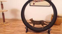 猫が無限に回る運動器具、それは...(動画)