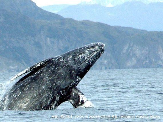 「クジラを守り、地球を守ろう」レオナルド・ディカプリオ氏による寄稿