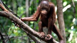 百匹目の猿現象