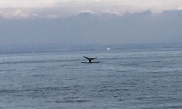 水しぶきを上げてジャンプ。これが東京湾をさまようクジラだ(動画)