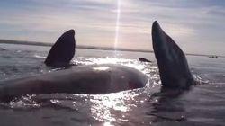 カヤックを漕いでたらクジラが背中に乗せてくれて大興奮【動画】