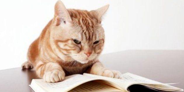 「まーご」の後継、テレ東に2代目看板猫「にゃーにゃ」初出演