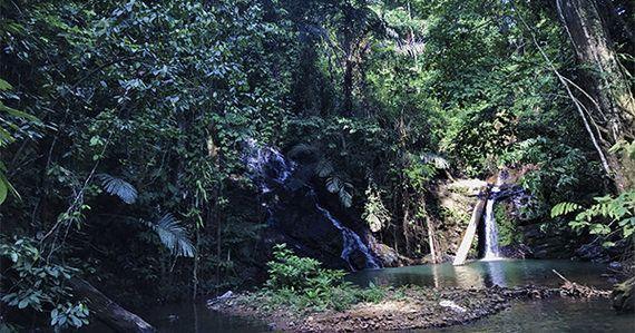 小さな水力発電機がつなぐ!スマトラの森とその未来