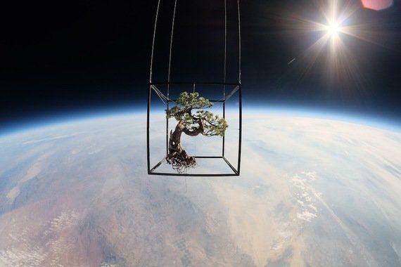 2014年。盆栽、宇宙への旅(画像)