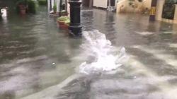 浸水した街中をコイが泳ぎ回る。佐賀市の中心部。どこからやってきたかというと...(動画)