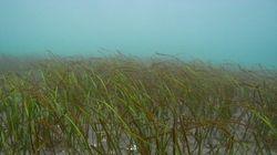 ブルーカーボン/地球温暖化の抑制に海の力を