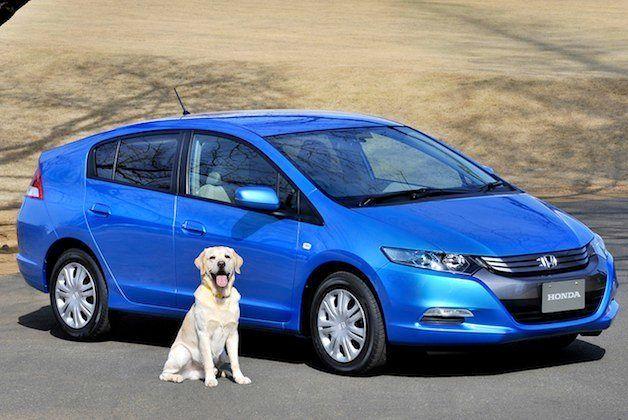 【レポート】犬を飼っているドライバーの半分は、愛犬を危険にさらしている!