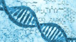 複製フォークの速度がゲノム不安定性を引き起こす