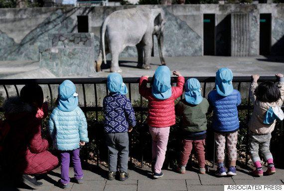ゾウの「はな子」最後のお別れ 井の頭自然文化園に多くの参列者「癒され、元気をもらいました」