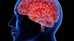 腸のマイクロバイオームは脳での奇形形成を促進する