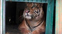 人間だけではない難民問題。ガザ「世界最悪の動物園」の動物たちが保護施設へ【動画】