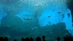 イワシ2万5000匹、ジャズに合わせて踊り狂う。仙台うみの杜水族館で圧巻のパフォーマンス